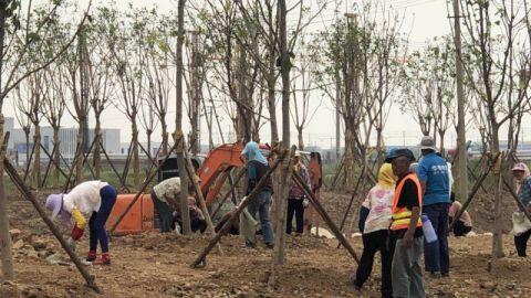 市开发区完成绿化造林2500多亩 为创森添彩
