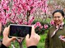 (連云全域旅游在行動)宿城山野春光好 桃紅又是一年春