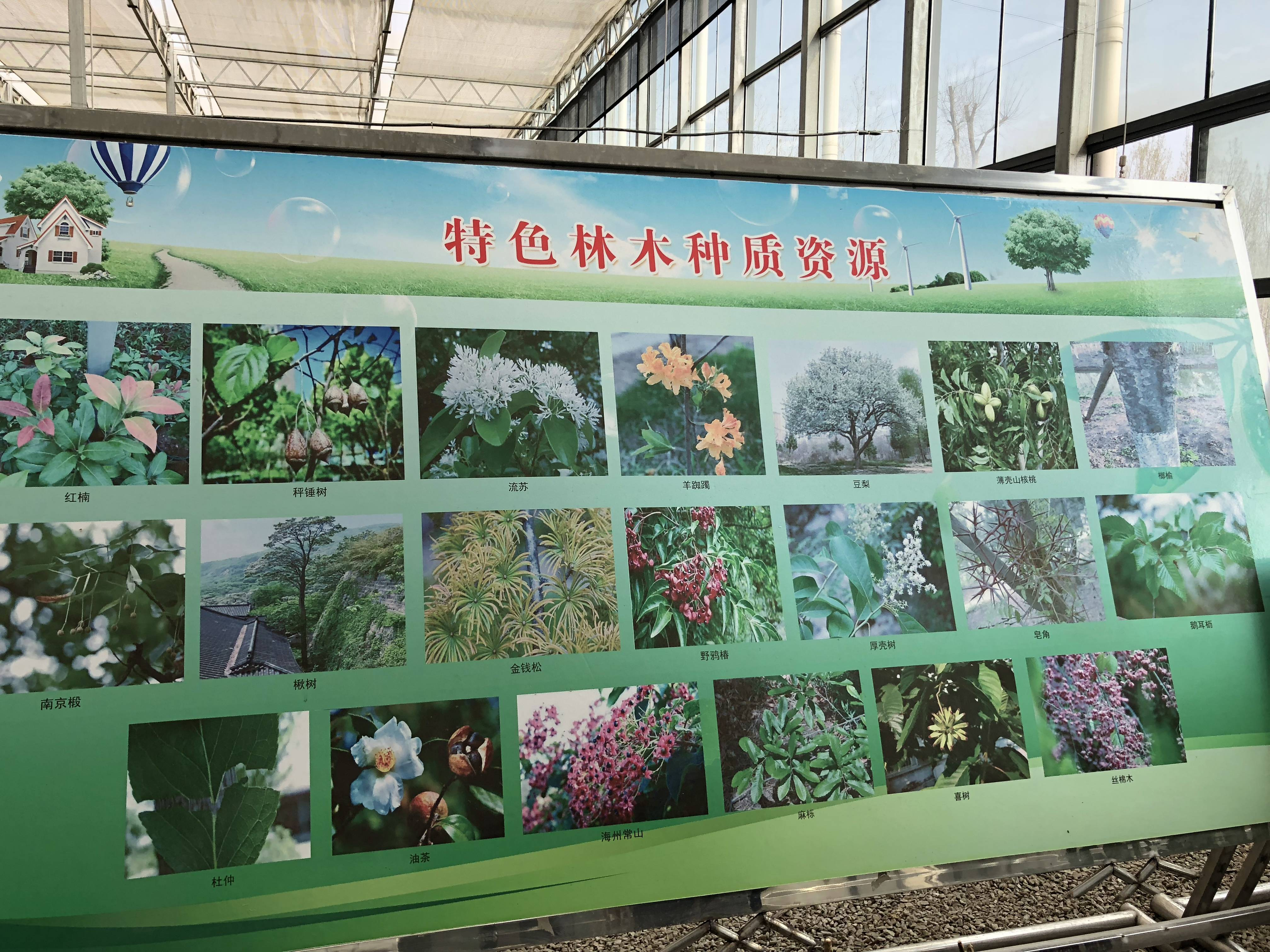 连云港突出栽好乡土树种