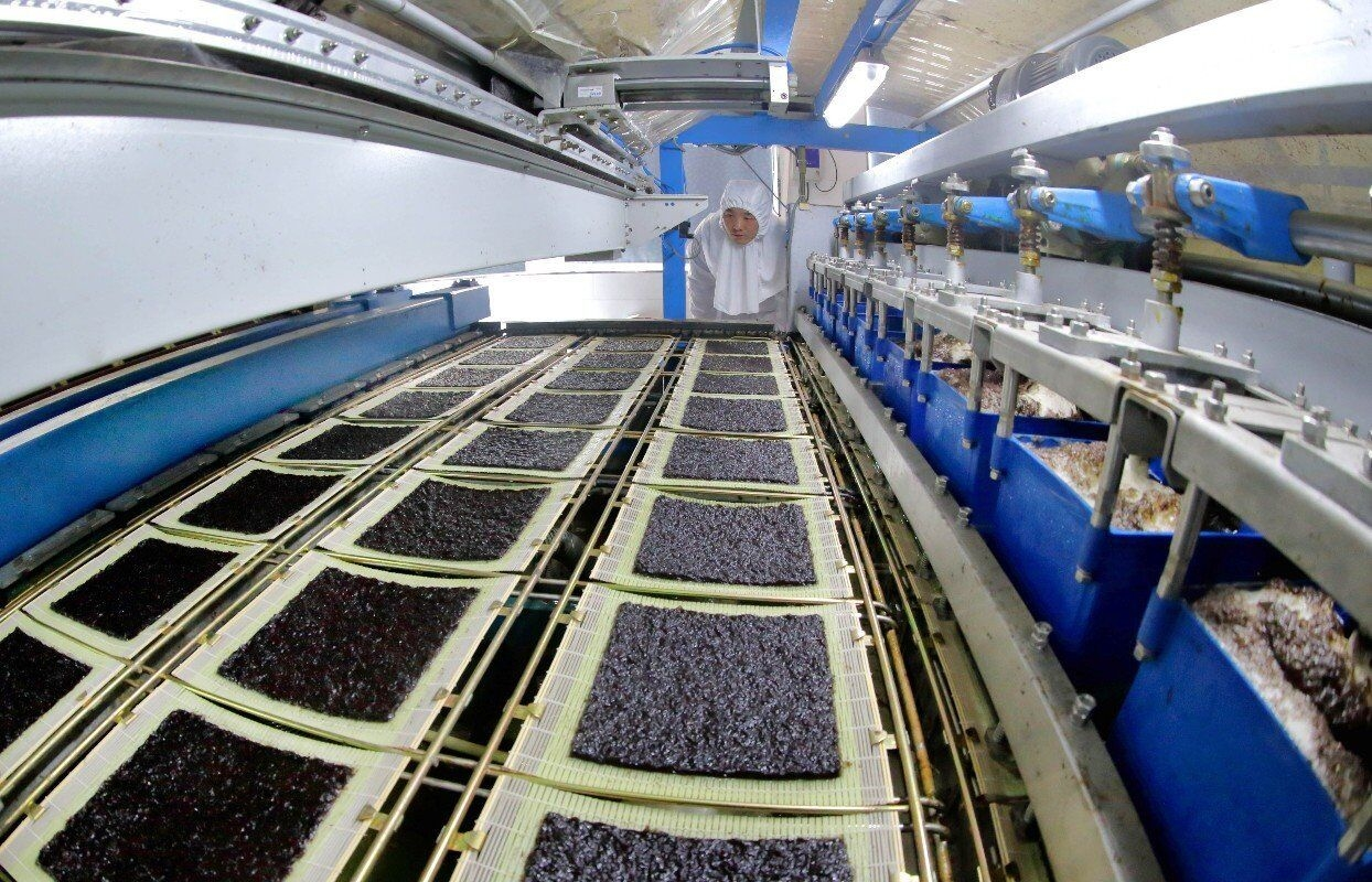 紫菜一次加工生产线